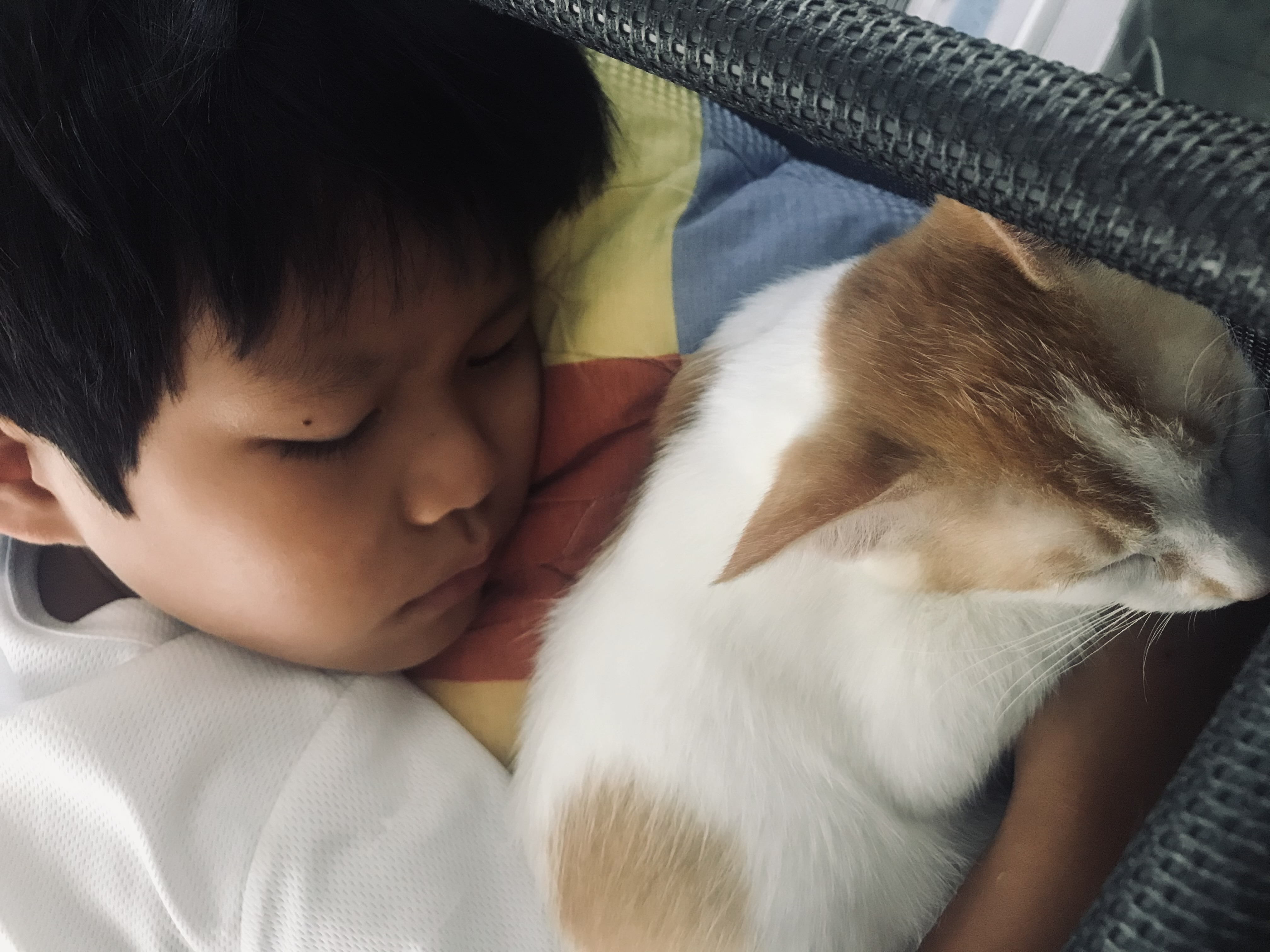 Child sleeping with ginger and white cat.