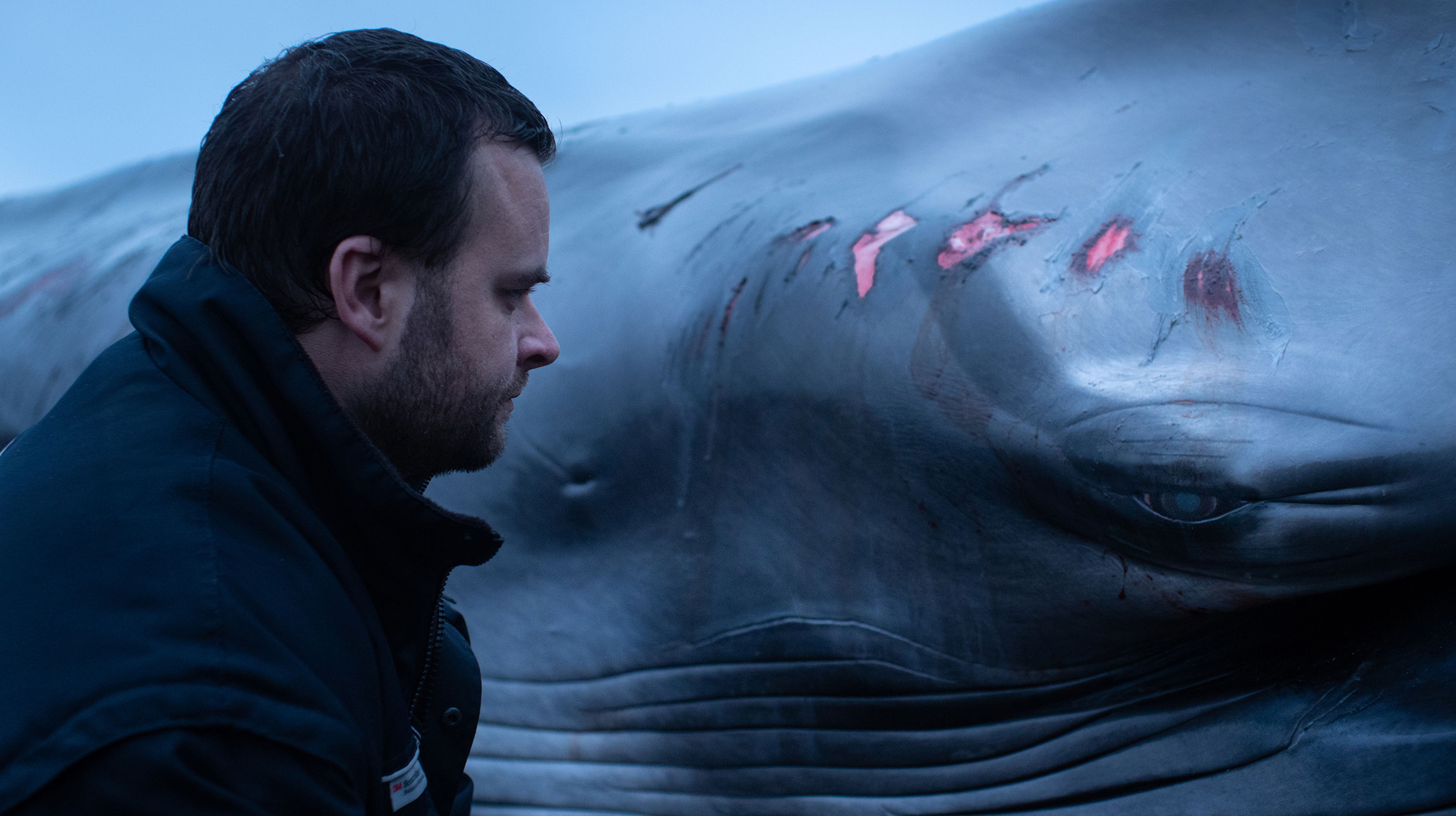 A man looks into the eye of a whale. The whale has grazes and open wounds along its body.