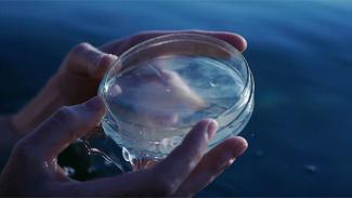 Two hands hold a petri dish of opaque liquid above a blue sea