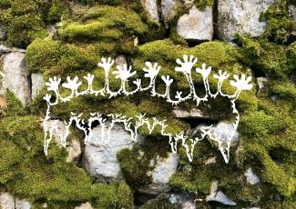 Illustration by Ronja Koman of mosses on a wall