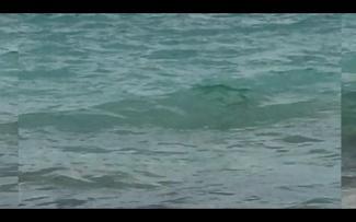 Copy of Sea.png